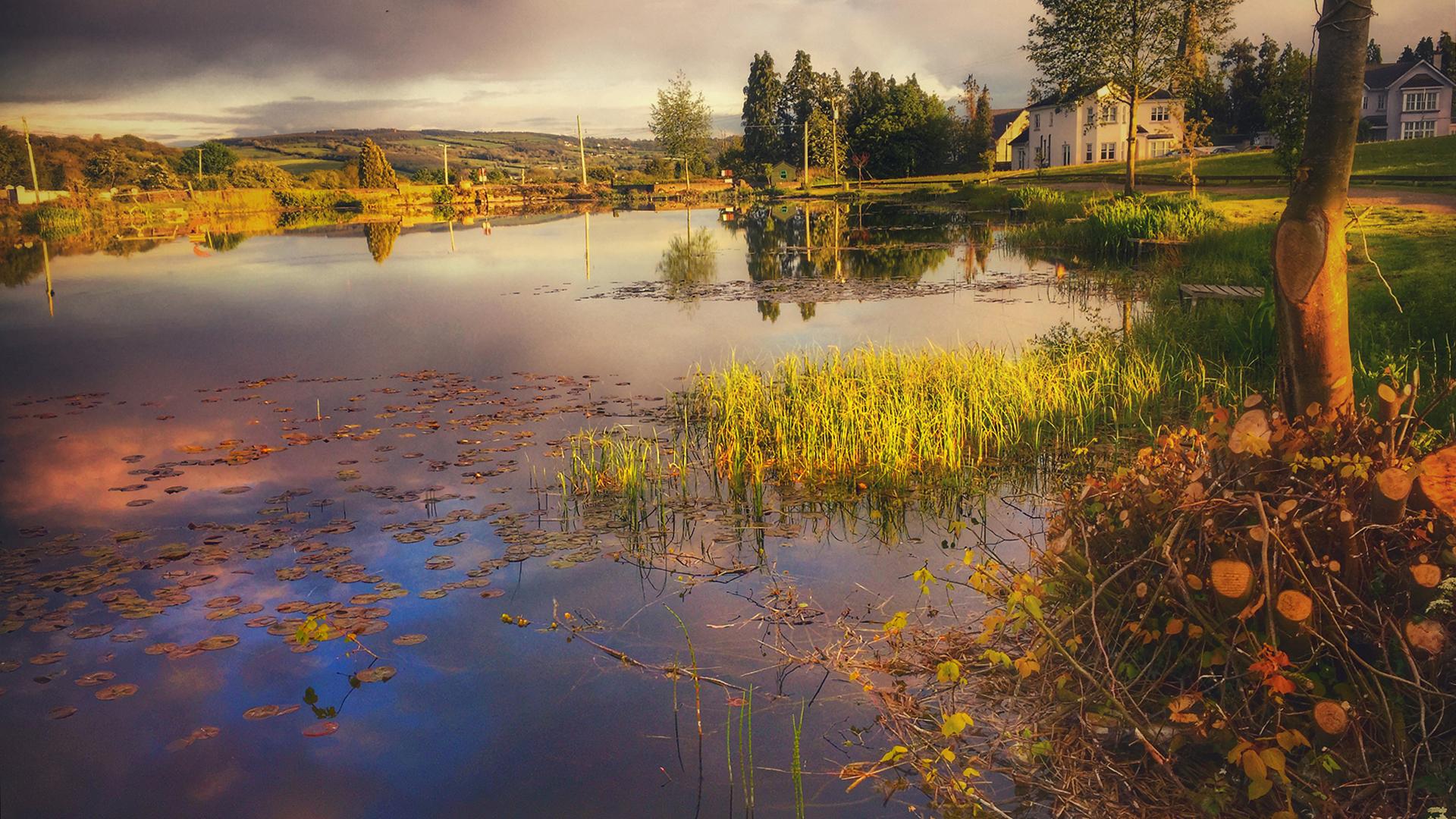 Gills Pond, Ballinakill, Co. Laois